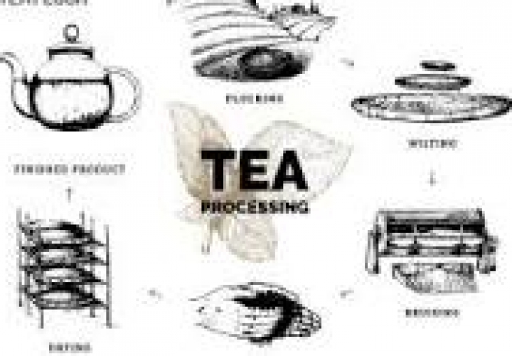 African Develops eNose sensor for tea processing